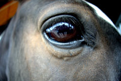 Horse eye. The horse eye in the center Stock Photo