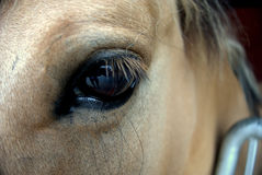 Horse eye. In the center Stock Images