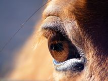 Horse eye close up Stock Photos