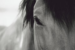 Horse Eye Close-Up Royalty Free Stock Image