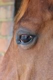 Horse eye close-up detail with reflection of yard Stock Images