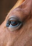 Horse eye close-up detail with reflection of yard Royalty Free Stock Images