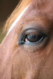 Horse eye close-up detail with reflection of yard Stock Photo