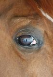 Horse eye close-up detail with reflection of yard Royalty Free Stock Photo