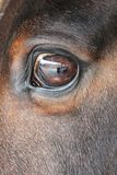 Horse eye close-up detail with reflection of yard. Close up of a horses head eye with reflection of me and the yard on eye Royalty Free Stock Photo