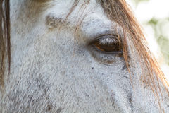 Horse eye close up in high key Royalty Free Stock Photo