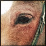 Horse eye close up Royalty Free Stock Photography