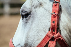 Horse eye close-up shot Stock Photography