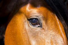 Horse eye. Close up of a horse with the sun from above Stock Images