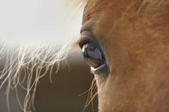 Horse eye closeup. Chestnut horse eye closeup. macro Stock Photo