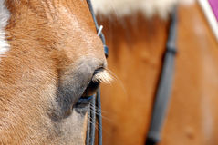 Horse eye closeup Stock Image