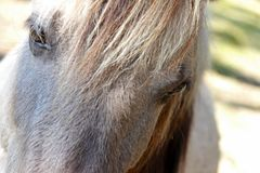 Horse eye closeup Royalty Free Stock Image