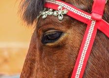 Horse eye closeup Stock Photography