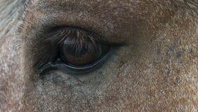 Horse eye closeup Royalty Free Stock Photo