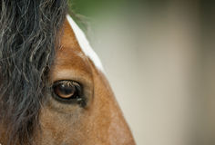 Horse eye closeup Stock Images