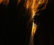 Horse eye in dark Royalty Free Stock Photography