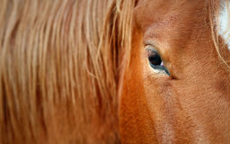 Horse eye detail Stock Photos