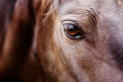Horse Eye Detail. A detail of a horse eye stock photography