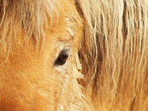 Horse eye, detail, close-up 1. Brown horse Stock Photography