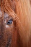 Horse eye detail Royalty Free Stock Photography