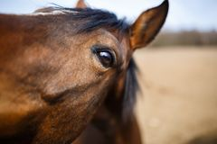 Horse eye detail Stock Photos