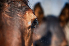 Horse eye detail Royalty Free Stock Photos