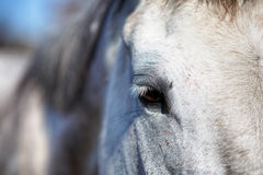Horse eye detail Royalty Free Stock Photo