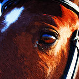 Horse Eye. Digital painting of a horse eye vector illustration