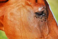 Horse Eye, Dolomites, 2007. Eye of the Horse on Dolomites Mountains in Italy Royalty Free Stock Photo
