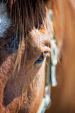 Horse Eye/face. A close up shot of a friend's horse eye/face Royalty Free Stock Images