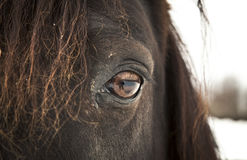 Horse Eye (left eye). Royalty Free Stock Images