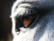 Horse eye macro. Grey white horse macro of chestnut eye Stock Photos