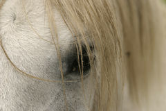 Horse Eye And Mane. A detail view of a horse's eye partially covered by hair from its mane stock photography