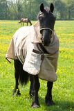 Horse with Eye Protector and Jacket Stock Images