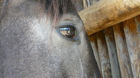 Horse Eye. Refection in a horse eye stock photos