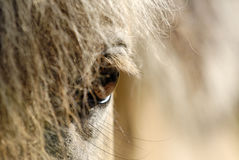 Horse eyes Royalty Free Stock Photo