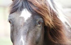 Horse Eyes Close Up. Beautiful close-up picture of a brown and white horse Royalty Free Stock Photo