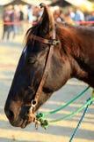 Horse face. Closeup shot of horse face Stock Photography