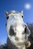 HORSE FACE royalty free stock photos