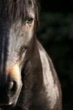 Horse face close up frontal Stock Photos