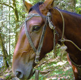 Horse face. Closeup in a green forest Royalty Free Stock Photography