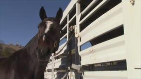 Horse Face Closeup stock video