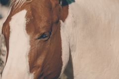 Horse face closeup on western farm stock image