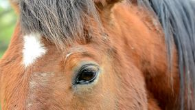 Horse face and eye in closeup with eye and mane detail. stock footage