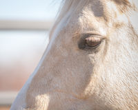 Horse face profile closeup Royalty Free Stock Photography
