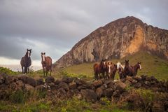 Horse facing the Ranio Raraku volcano on Easter Island stock photo