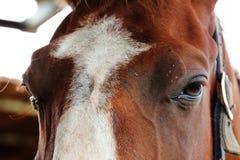 Horse fair and beautiful eyes. Horse fair, beautiful and sad eyes Stock Photos