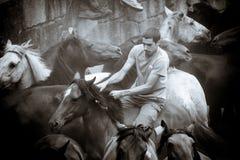 Horse fair Stock Photography