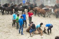 Horse fair Royalty Free Stock Photos