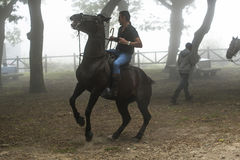 Horse fair. PONTEVEDRA, SPAIN - AUGUST 2, 2015: Detail of Horse Fair, where tame horses and was cut wild horses mane, held in the village of Viascon Royalty Free Stock Photos